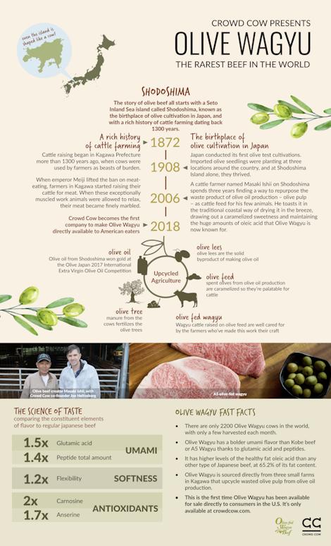 Olive wagyu infographic